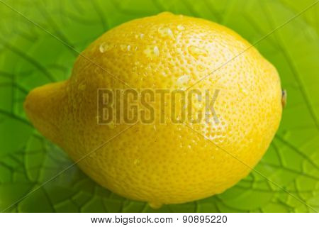 Whole lemon with water drops on a green plate
