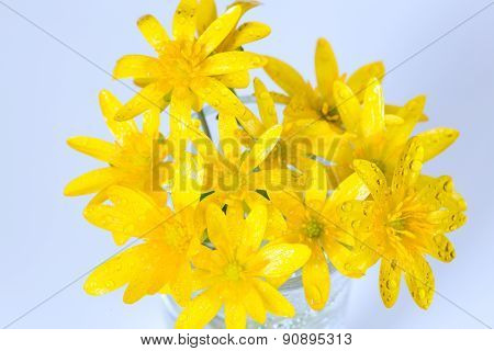 Early spring flowers Ranunculus ficaria bouquet