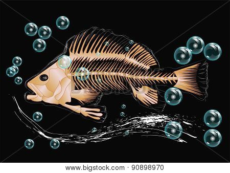 Fish Skeleton And Bubbles