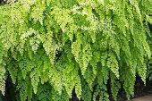 stock photo of fern  - Fern full frame background - JPG