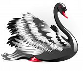 pic of black swan  - Elegant black swan isolated on a white background - JPG