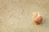 stock photo of hermit  - Hermit Crab in a screw shell on wet sand of a tropical sea beach selective focus - JPG