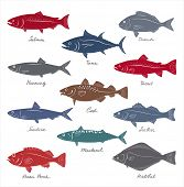pic of fish  - Big collection of marketable fish symbols - JPG