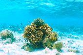 image of coral reefs  - Coral reef at South Ari Atoll - JPG