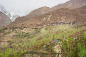 picture of karakoram  - Hunza valley with Blossom in Northern area of Pakistan - JPG