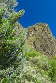stock photo of municipal  - Gran Canaria - JPG
