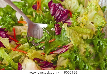 Fresh Green Lettuce With Olive - Healthy Dish