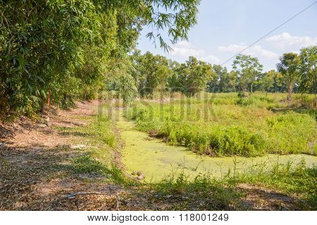 country landscape in thailand