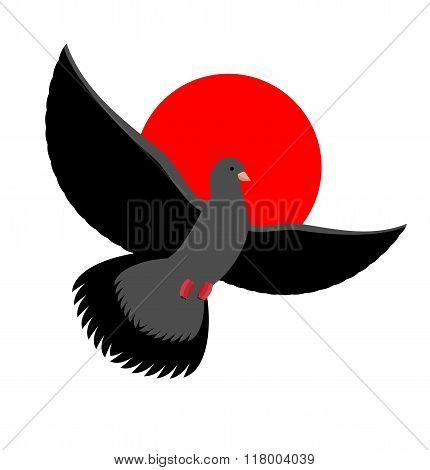 Black Dove Symbol Of Sadness And Mourning. Flying Black Bird On Red Sunset. Wingspan Is Pigeon
