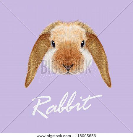 Rabbit Animal Portrait