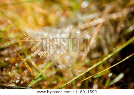 Beautiful Autumn Waterdrops In Woods