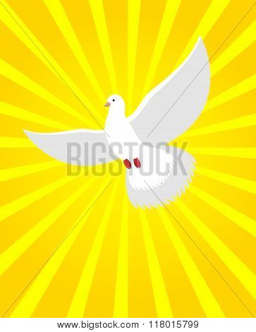 White Dove In Sunny Radiance. Divine Light And White Bird. White Flying Dove Is Symbol Of Human Soul