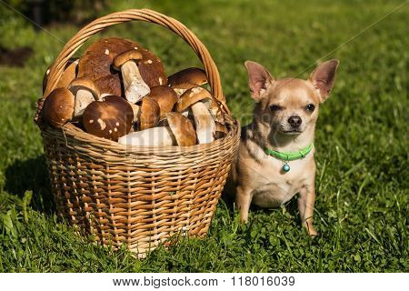 The dog and the mushrooms