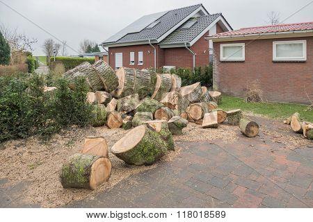 Transformed Sawn Tree On A Resort.
