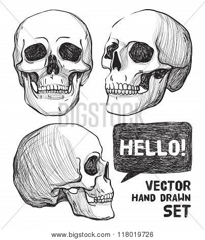 Skulls. Vintage Vector illustration