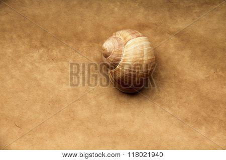 Shell Of Grape Snail