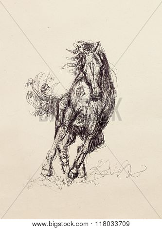 Draw pencil horse on old paper, original hand draw.