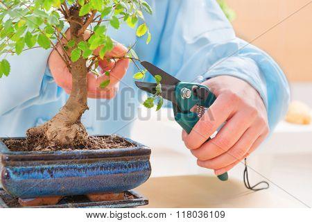 Woman wearing traditional chinese uniform trimming bonsai tree
