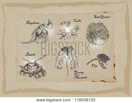 Microorganisms - Daphnia, Beetle, Flea and more.