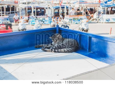 Lazy cat relaxing on a market stall in Mediterranean town of Kas, Antalya, Turkey.