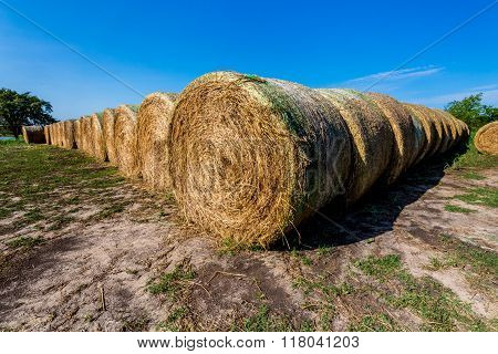 Round Hay Bales In Texas