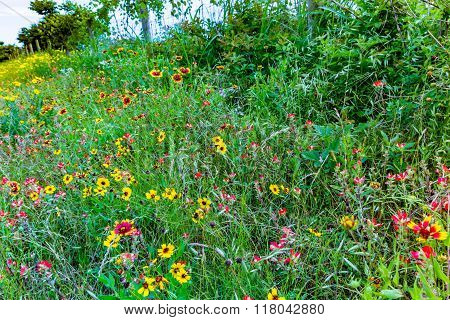 A Wide Variety Of Yellow And Orange Texas Wildflowers