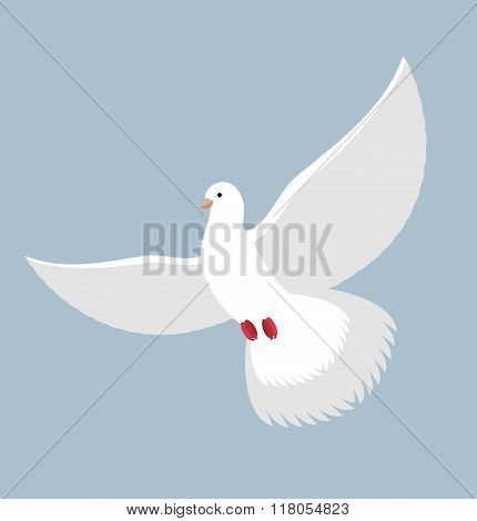 White Dove. Flying White Pigeon. Bird With Wings. White Dove Symbol Of Peace.