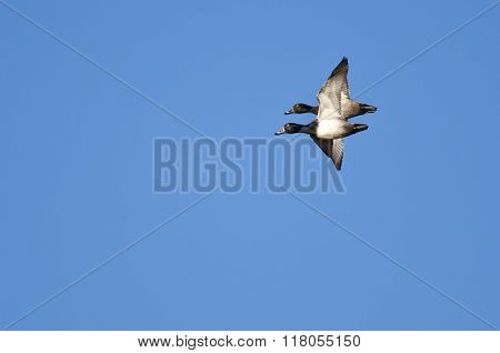 Two Ring-necked Ducks Flying Close In A Blue Sky