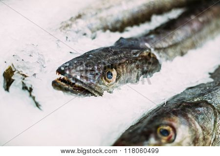 Fresh fish merluza or hake on ice on market store shop.