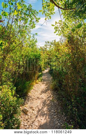 Lane, Path, Way in summer deciduous forest Trees