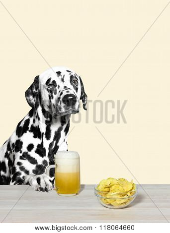 Dalmatian Drinking Beer And Chips