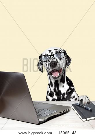 Dalmatian With Laptop And Notebook