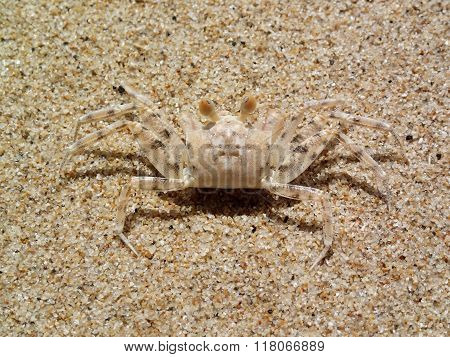 Camouflage Of Sand Crab