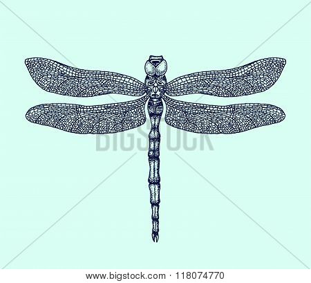Hand-drawn dragonfly vector illustration