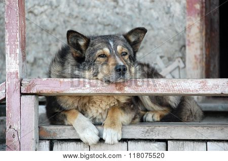 Old Dog At Staircase