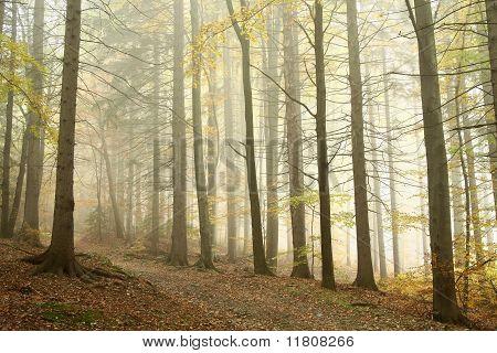 Ruta de montaña en el bosque brumoso del otoño