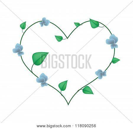 Winged Bean Plants In A Heart Shape