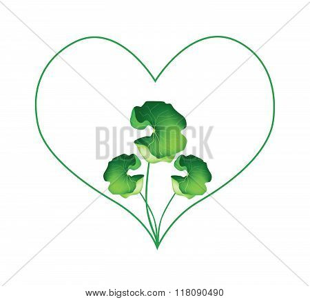 Fresh Asiatic Pennywort Plant In Heart Shape