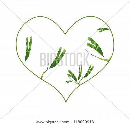 Evergreen Leaves In A Heart Shape Border