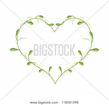 Lovely Green Mistletoe In A Heart Shape