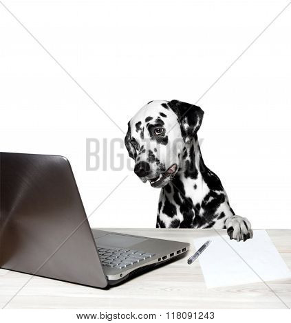 Dalmatian Works At The Notebook