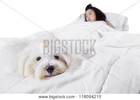 Cute Dog Sleeping On Bed With His Owner