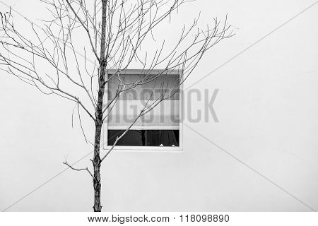 Exterior, dry branches with window