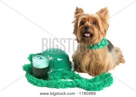 St Patricks Day Yorkie
