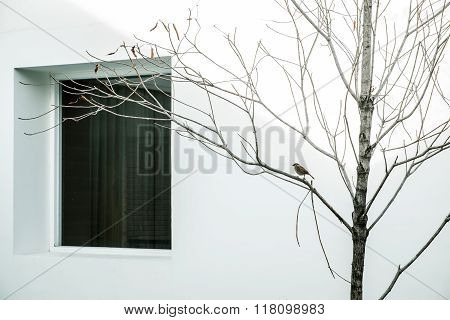 Minimalist abstract, dry branches with a bird and window