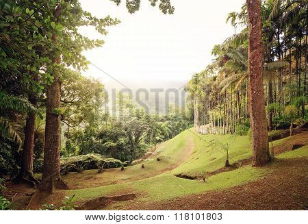Martinique, Carribean. The Beautiful Garden Of Balata