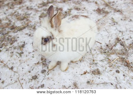 Masking White Rabbit On The Snow
