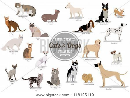 Set of flat sitting or walking cute cartoon dogs and dogs. Popular breeds. Flat style design isolate