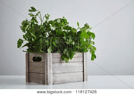 Wooden Box Parsley Cilantro Isolated On White Table