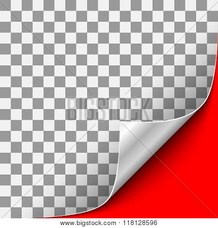 Silver Curled Corner